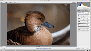 Free Video Tutorial – The Basics of the Adobe Camera Raw Interface