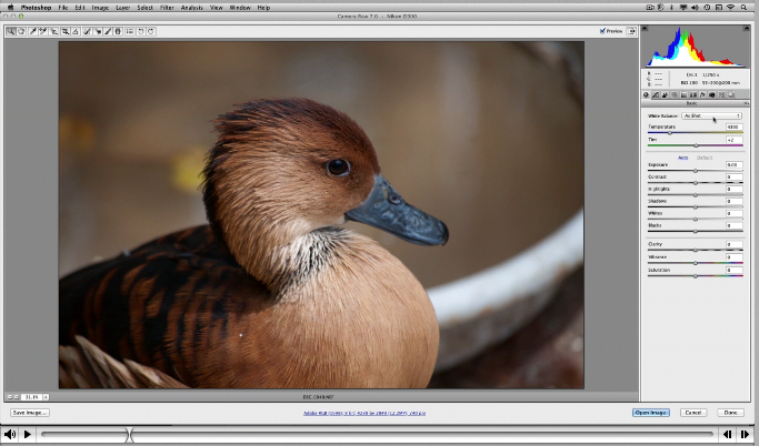 Free Video Tutorial - The Basics of the Adobe Camera Raw