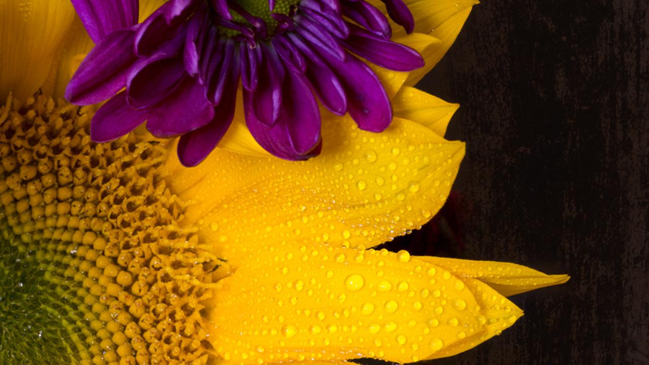 flowerbanner