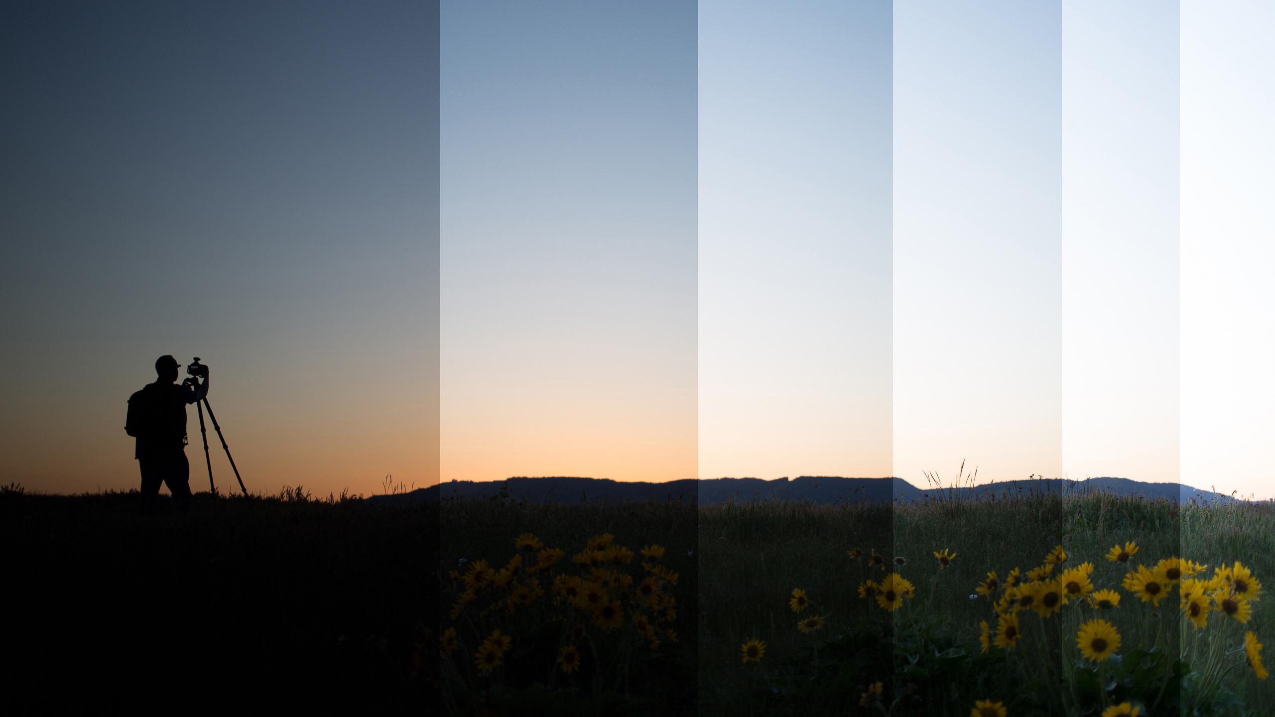 silhouette-nicolesy