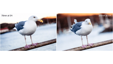 Using Longer Focal Lengths to Compress and Blur Your Backgrounds