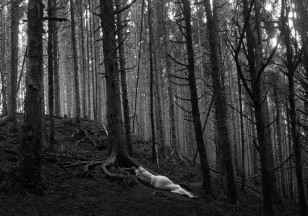 tree_Panorama1