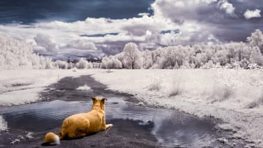 Tips on Photographing with an Infrared-Converted Camera