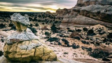 Creating A Tilt Shift Effect Using Snapseed On Your Mobile Device