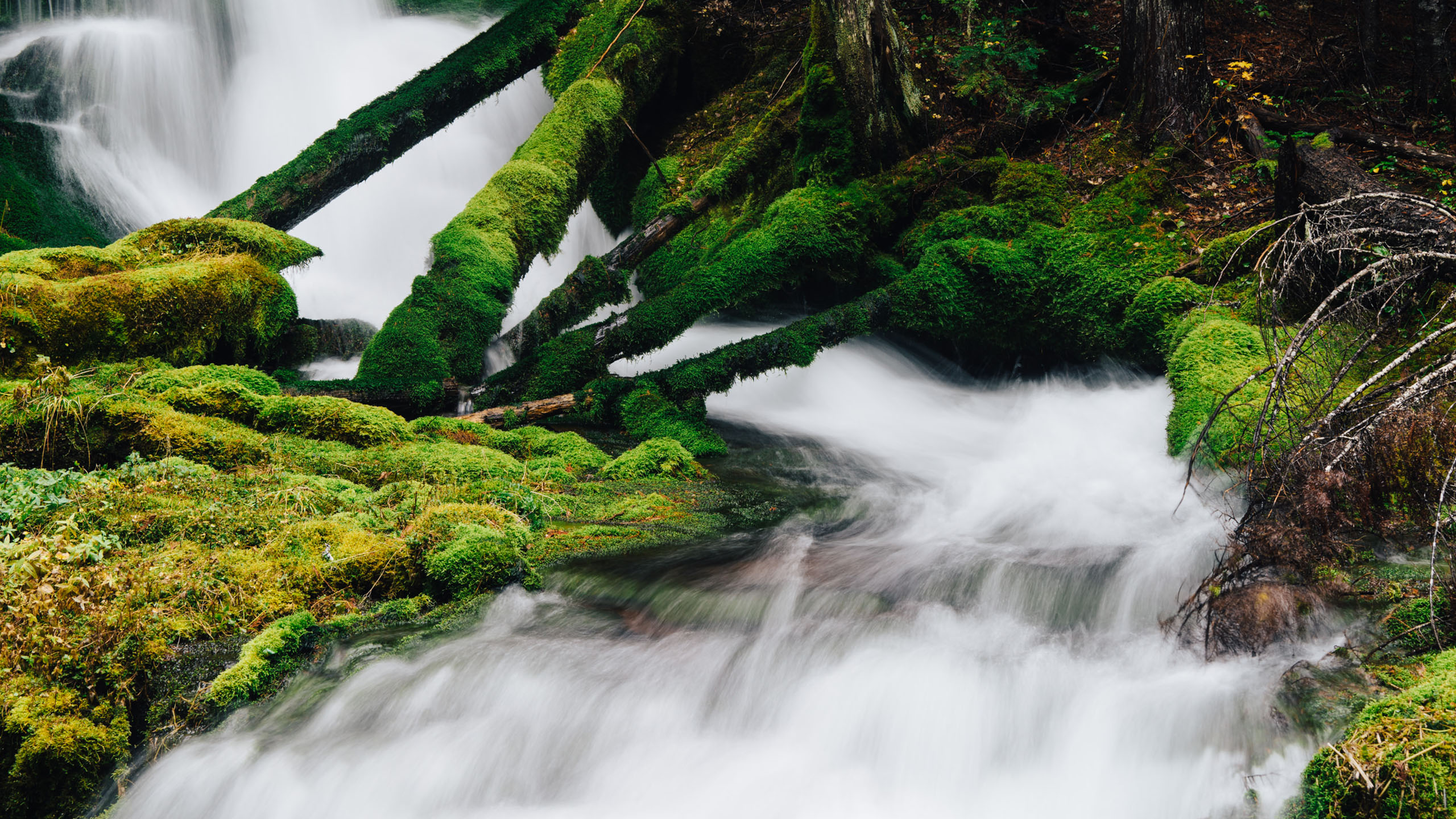 The Path of Big Spring Creek Falls