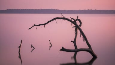 Photo of the Day: Dead Tree Long Exposure