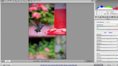 Exploring Travel Photography: Hummingbird Editing (CR08)