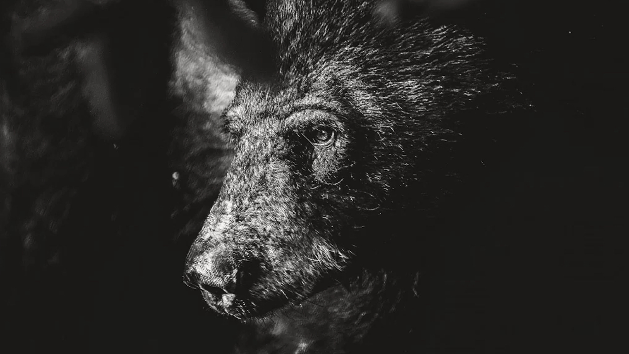 Joaquin Arellano: Bear