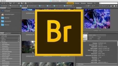 Batch Renaming Photos and Videos in Adobe Bridge