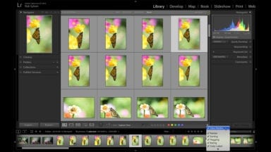 Lightroom's Grid, Loupe, Compare, and Survey View: Which One to Use?