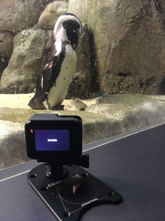 Platypod Pro for discreet shooting
