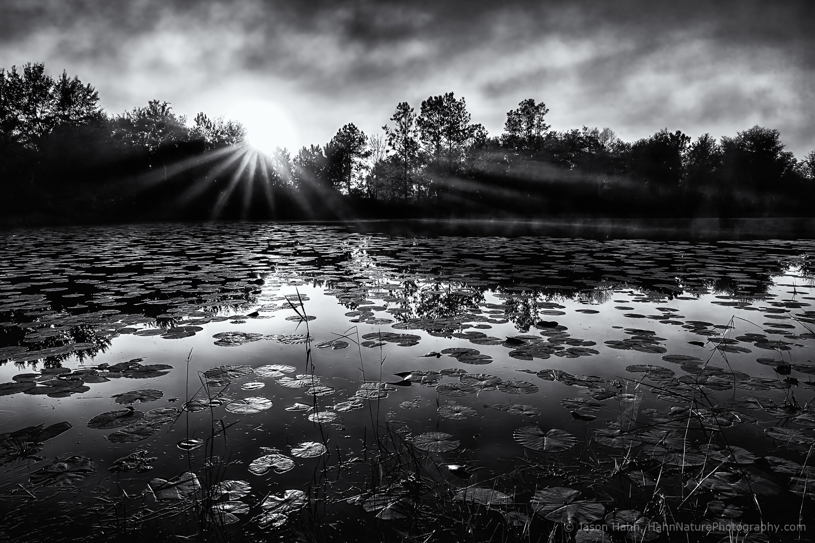 featured-jhahn-cypress-creek-_g0c5807_hdr-bw