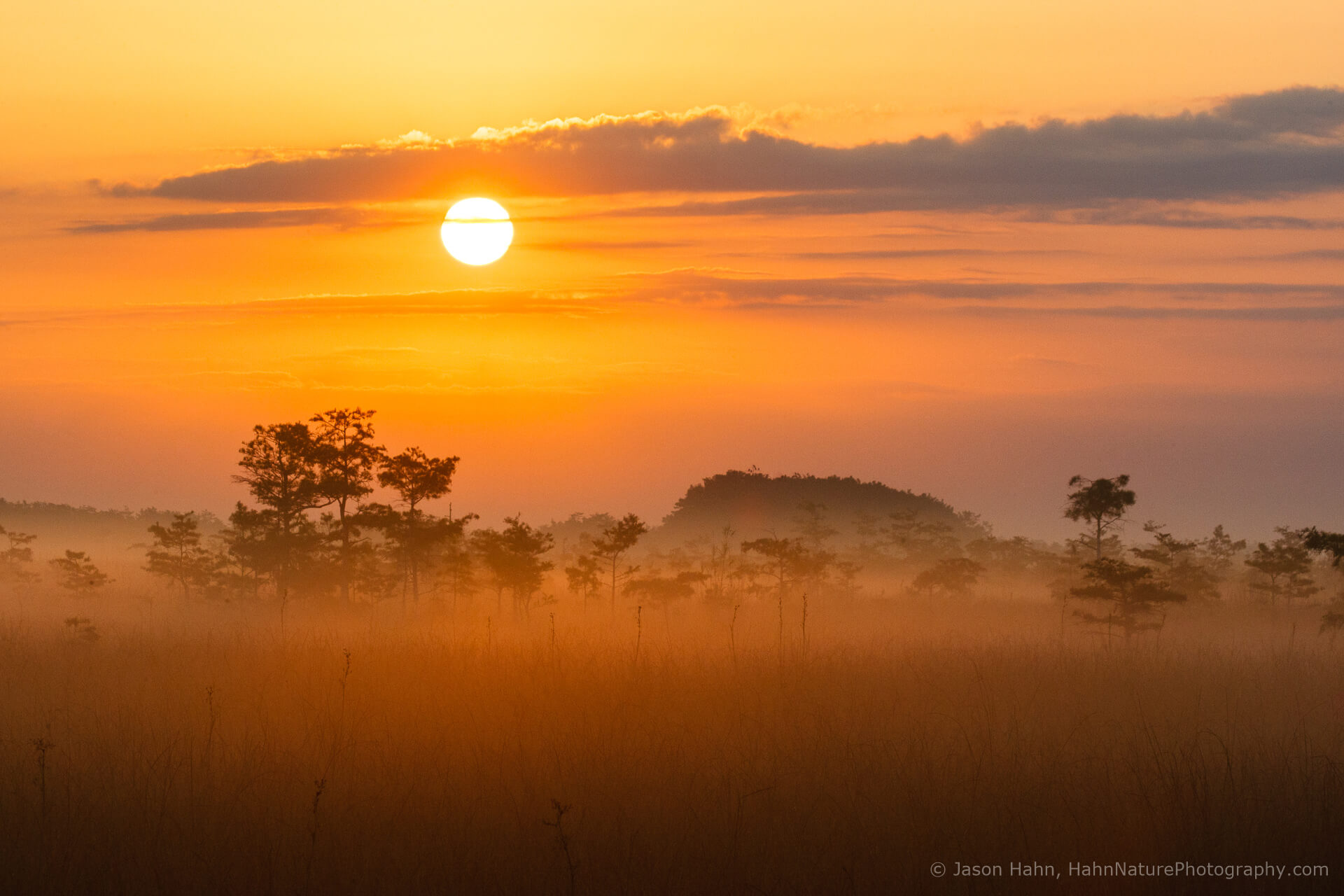 Sunrise on a foggy morning in the Everglades.    Low ground fog like this really adds dimension to images, creating scale and a sense of depth.