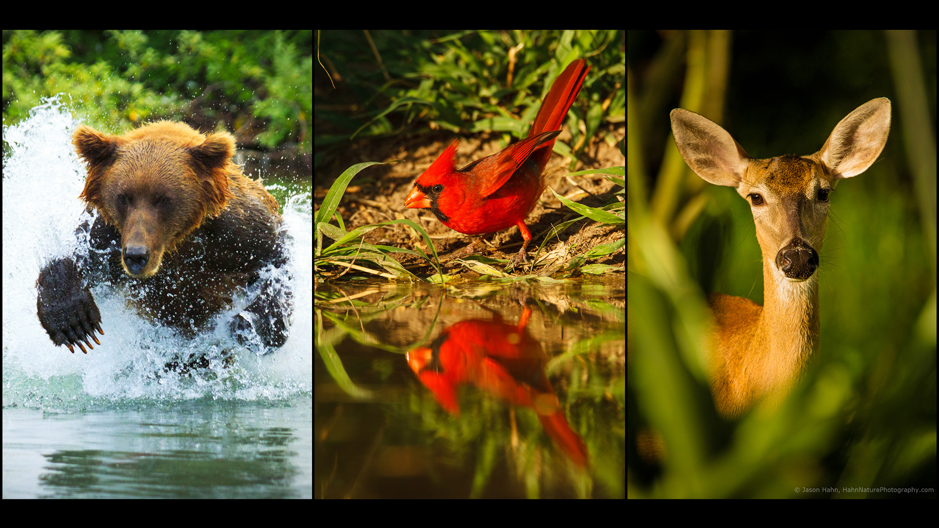 jhahn-FEATURED-Wildlife-photo-tryptic-rev4