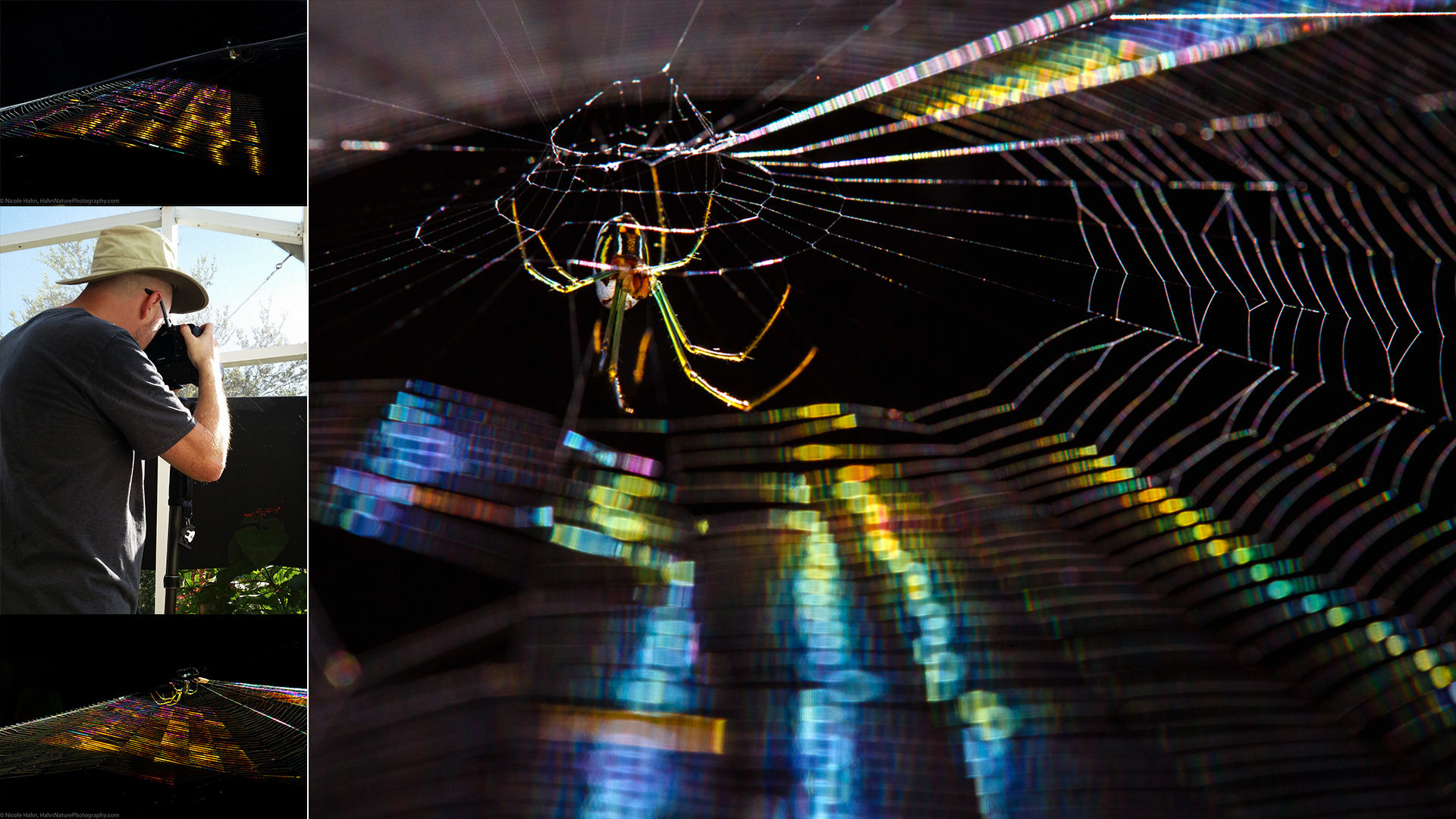 FEATURED-jhahn-rai-the-spider