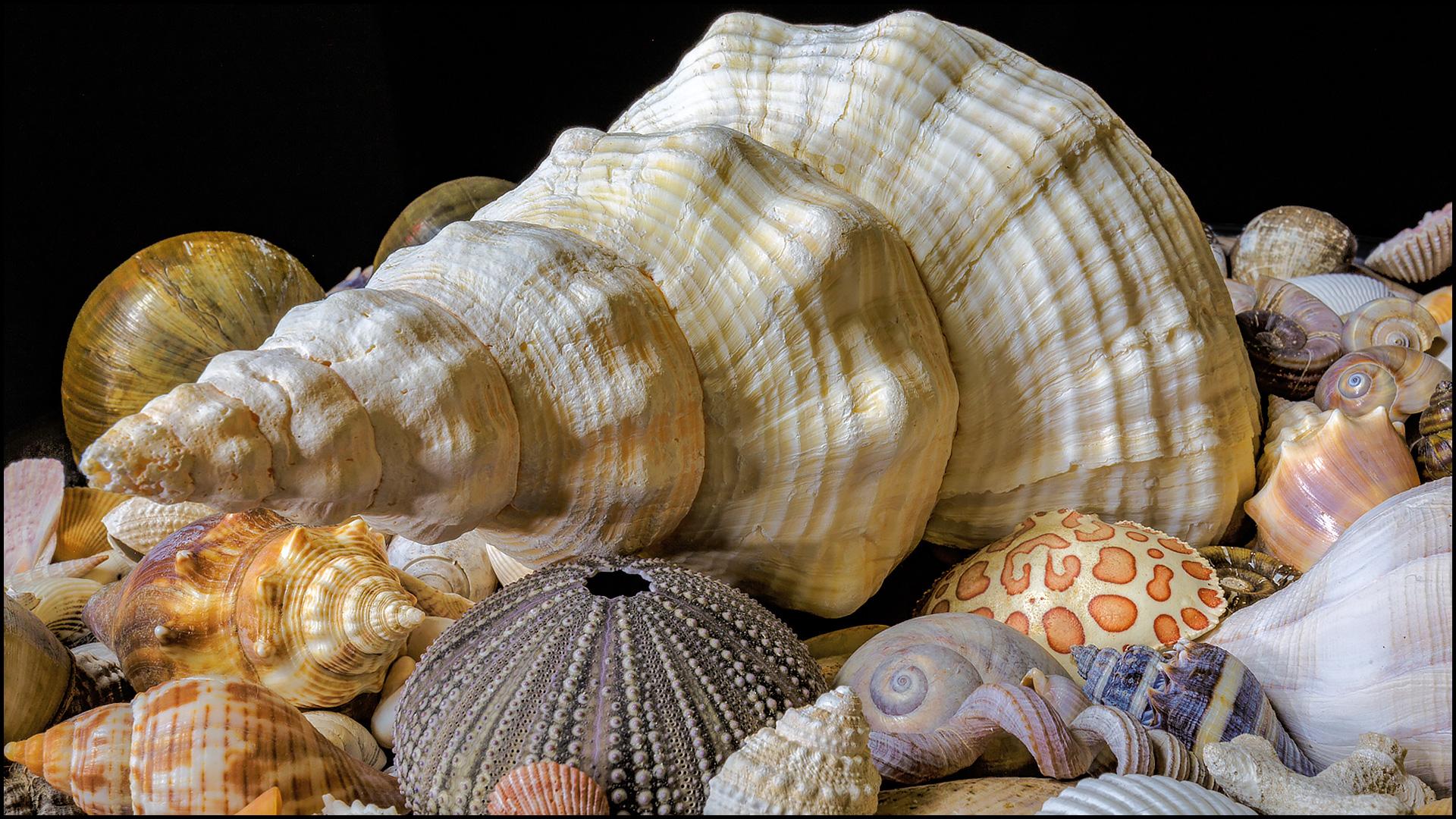 jhahn-FEATURED-seashells-lightpainted