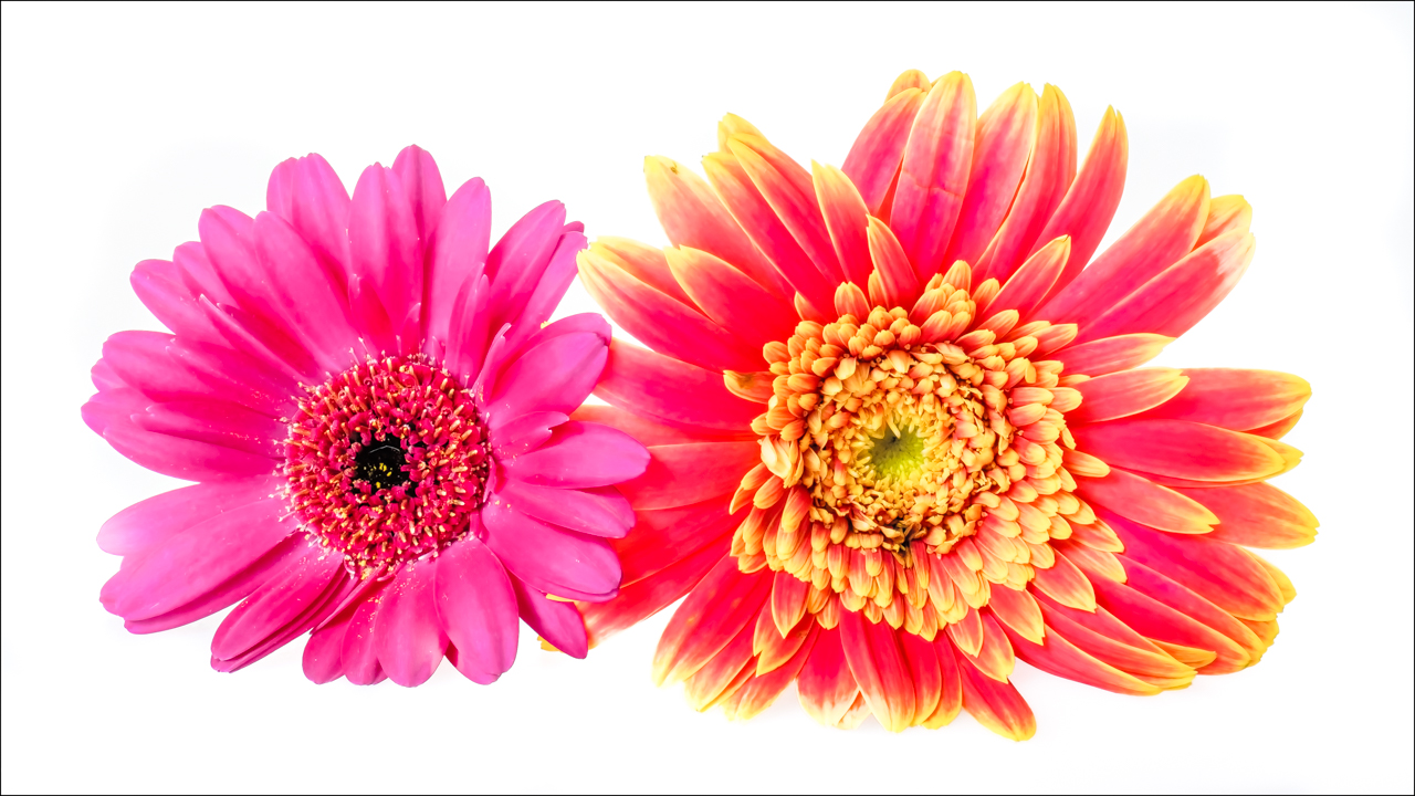 Two Colorful Flowers