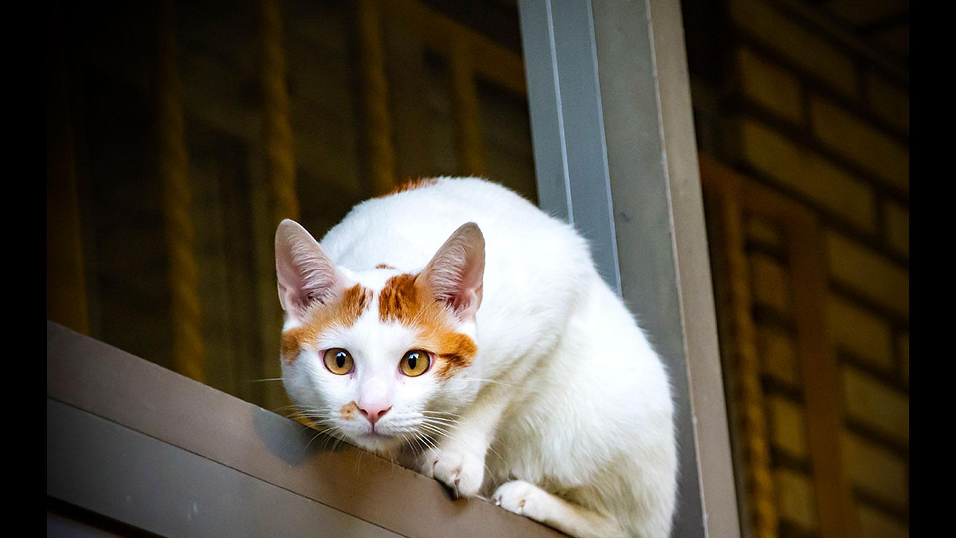 Pets | Photographer: RitxyCurator: Bryan Esler