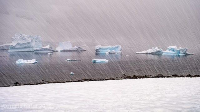 Icebergs in Antarctica (Danko) in falling snow