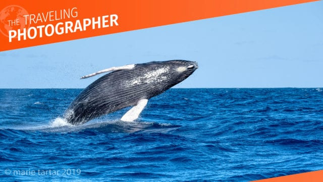 The Traveling Photographer: Humpback whale tales — topside lessons, part one