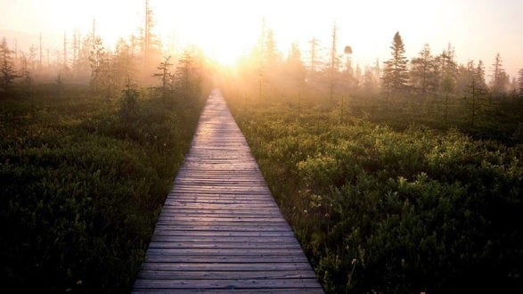 The Enthusiast's Guide to Travel: Prepare your mind, body & soul Sunrise at Mer Bleue, Ottawa, Ontario, was a magical experience. As the sun rose and filled the bog, it beautifully illuminated remaining fog and haze.