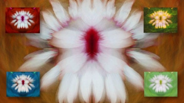 flowers_abstract_2560p