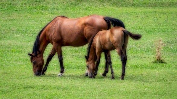 horses_flex_P1222307_2560