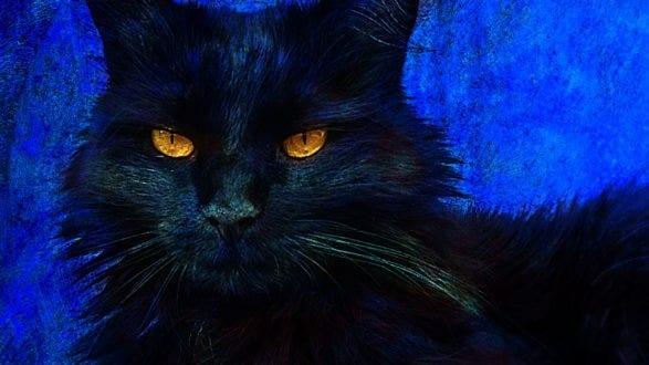 cat_art_v6_2560p