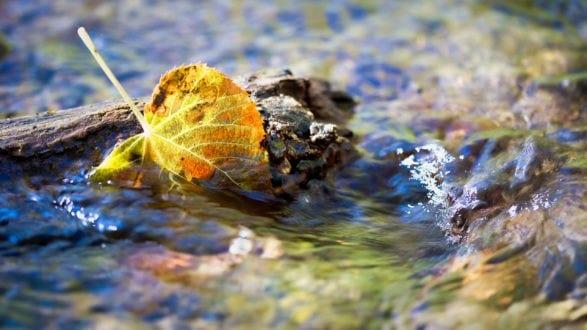 fall leaf in a stream