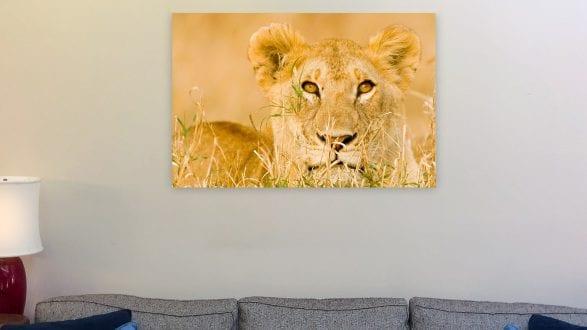 Living room Xpozer lionessFP