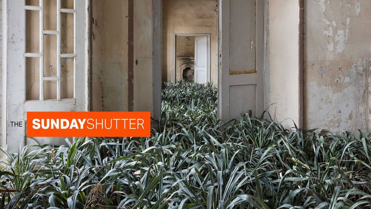 The Sunday Shutter: January 19, 2020