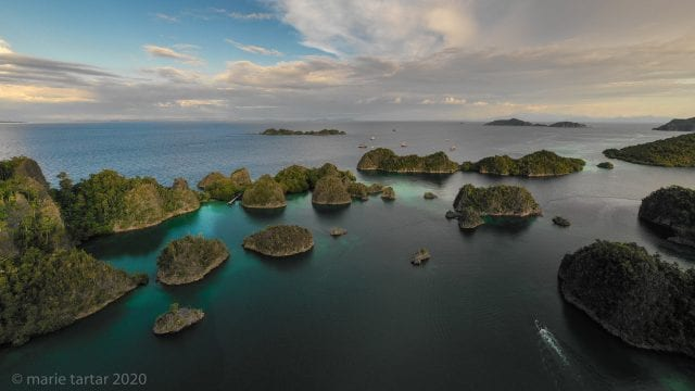 In search of Wilson's bird-of-paradise in West Papua