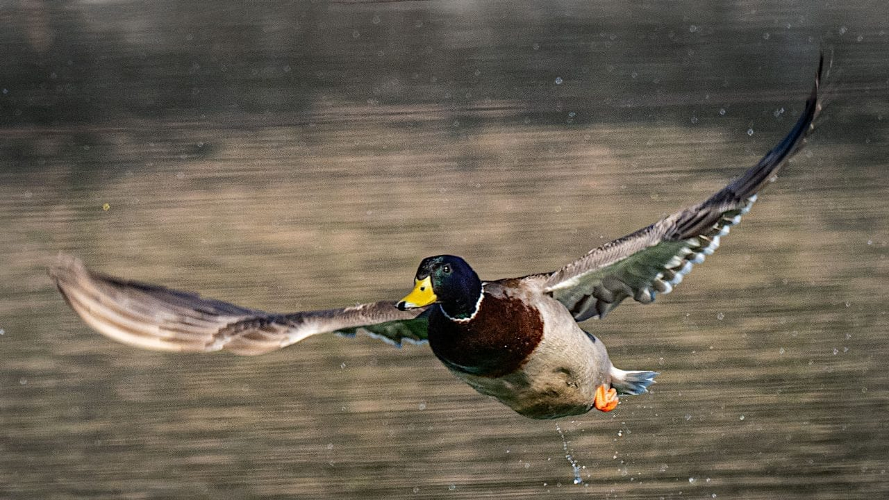 Olympus tracking focus for wildlife photography | Photofocus
