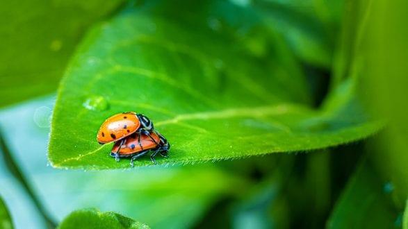 lady_bugs_4123747_2560p