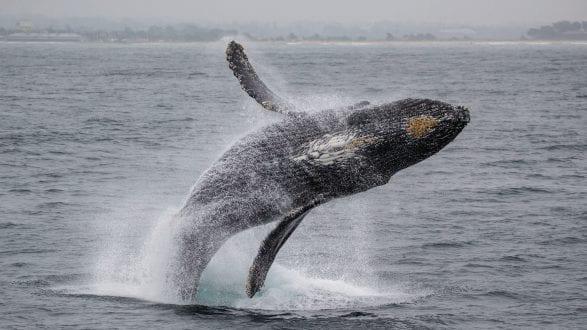 Amazing Photography by Xpozer Shane Keena Under the surface