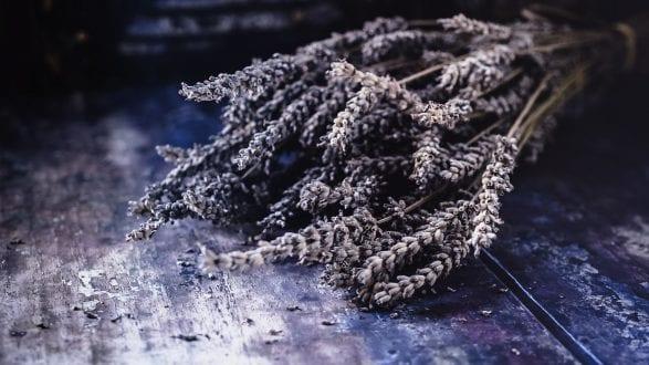 Lavender Header