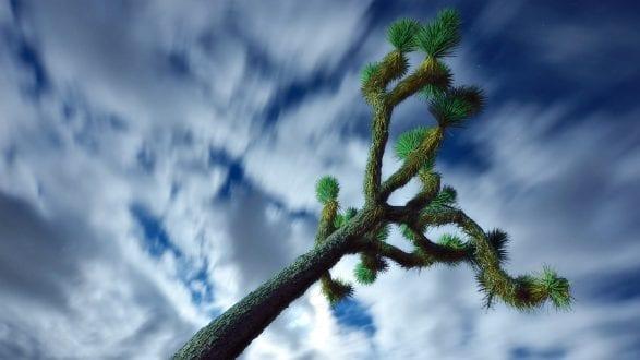 5302_kenlee_2017-02-11_2218_joshuatree-treeandclouds-20sf8iso1250-PHOTOFOCUS HEADER 2560x1440px