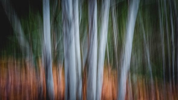 Abstract Alders