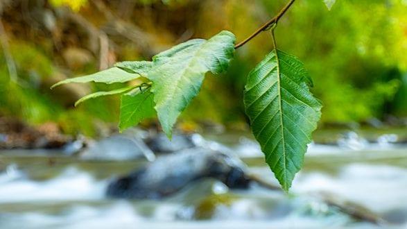 oak_creek_ND_A070250_2650p