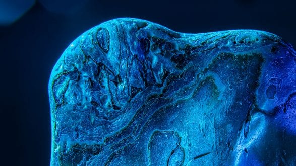 3781_kenlee_second-macro-experiments_201212_1740_16sf11iso200_back-side-of-shell 2560x1440px Header Photofocus