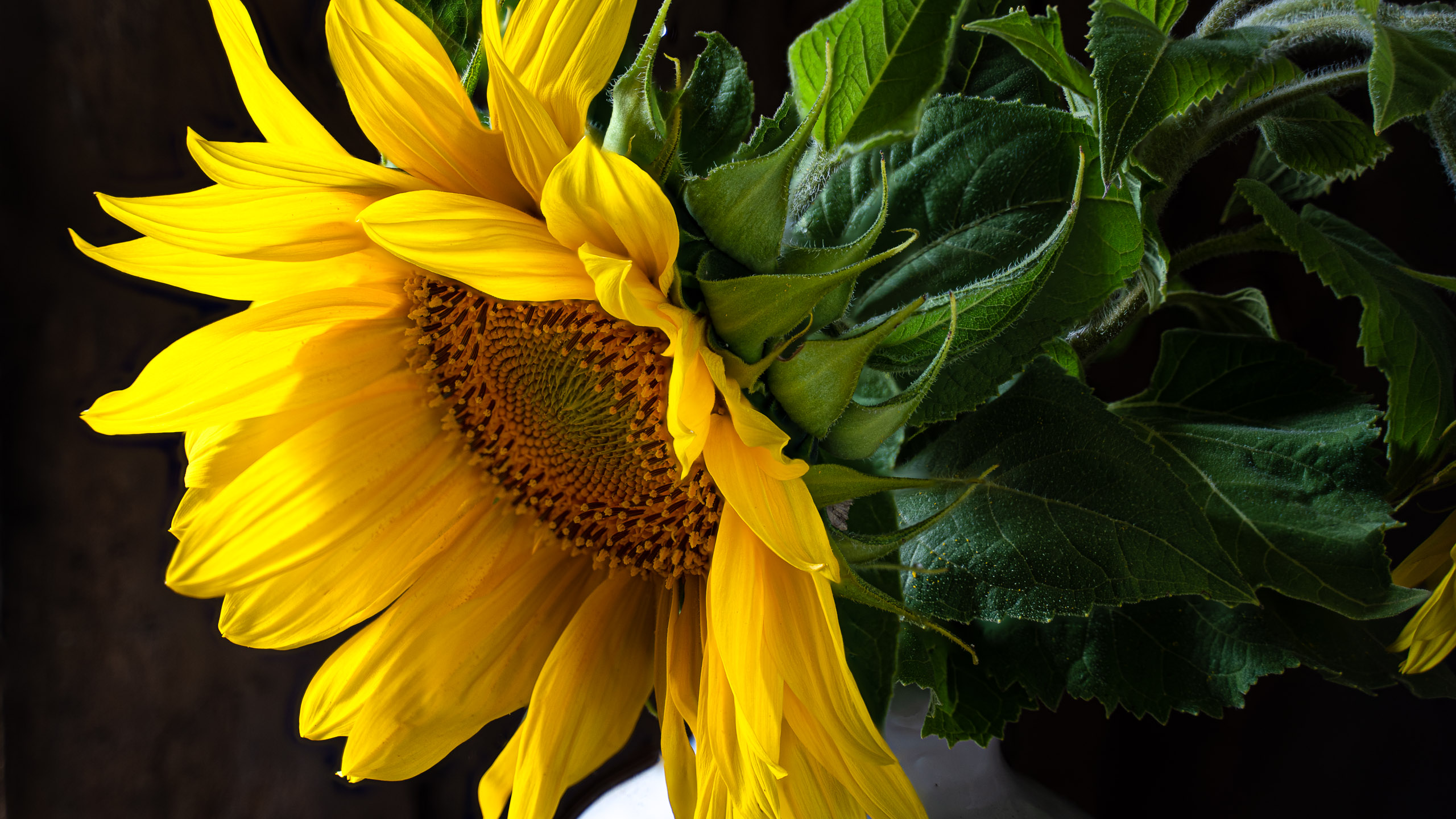 JuliePowell_Sunflower Banner (1 of 1)