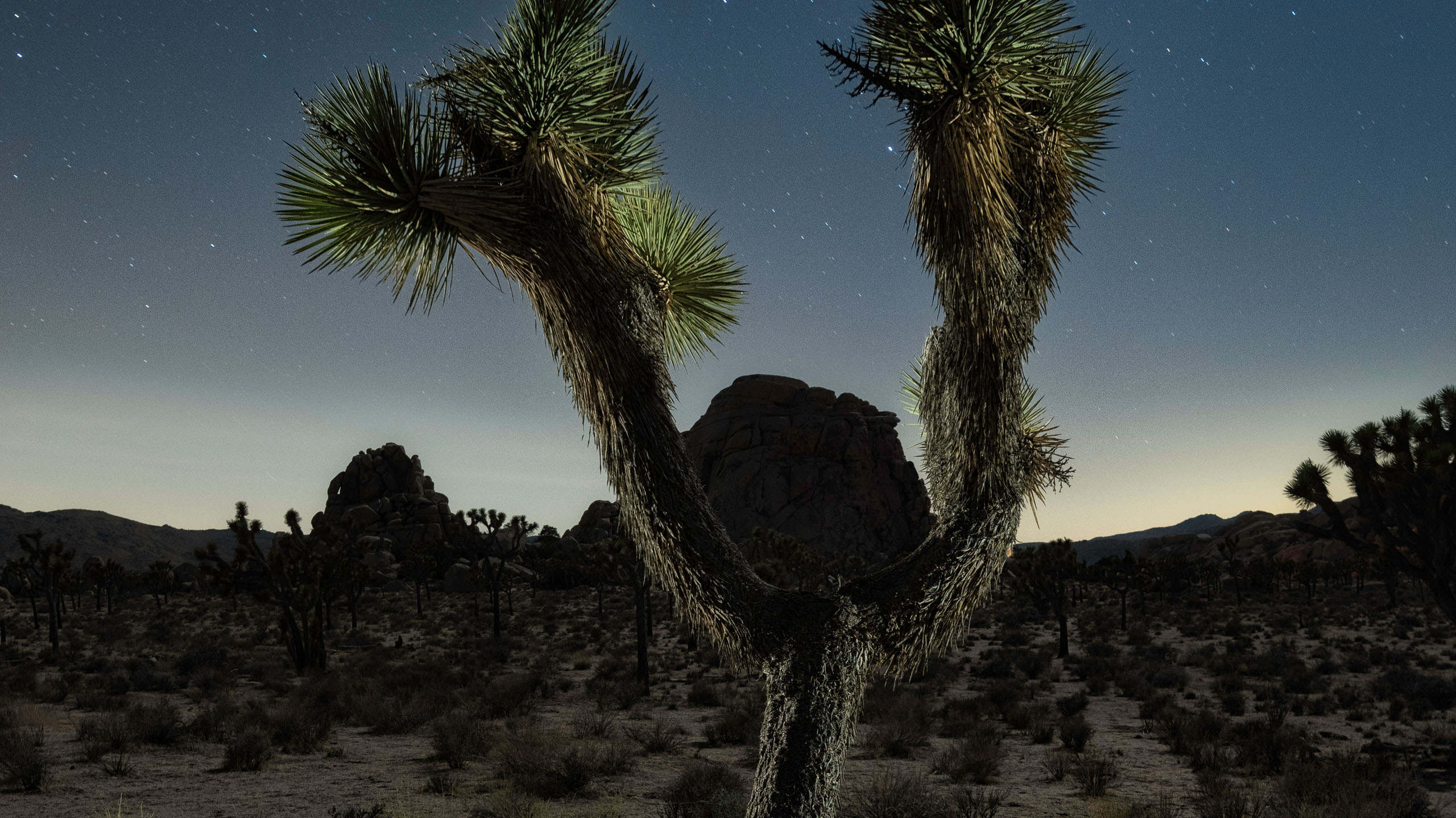 4013_kenlee_joshuatree_210320_2220_30sf71iso1600_wishbone-joshua-tree-sidelit 2560x1440 header photofocus