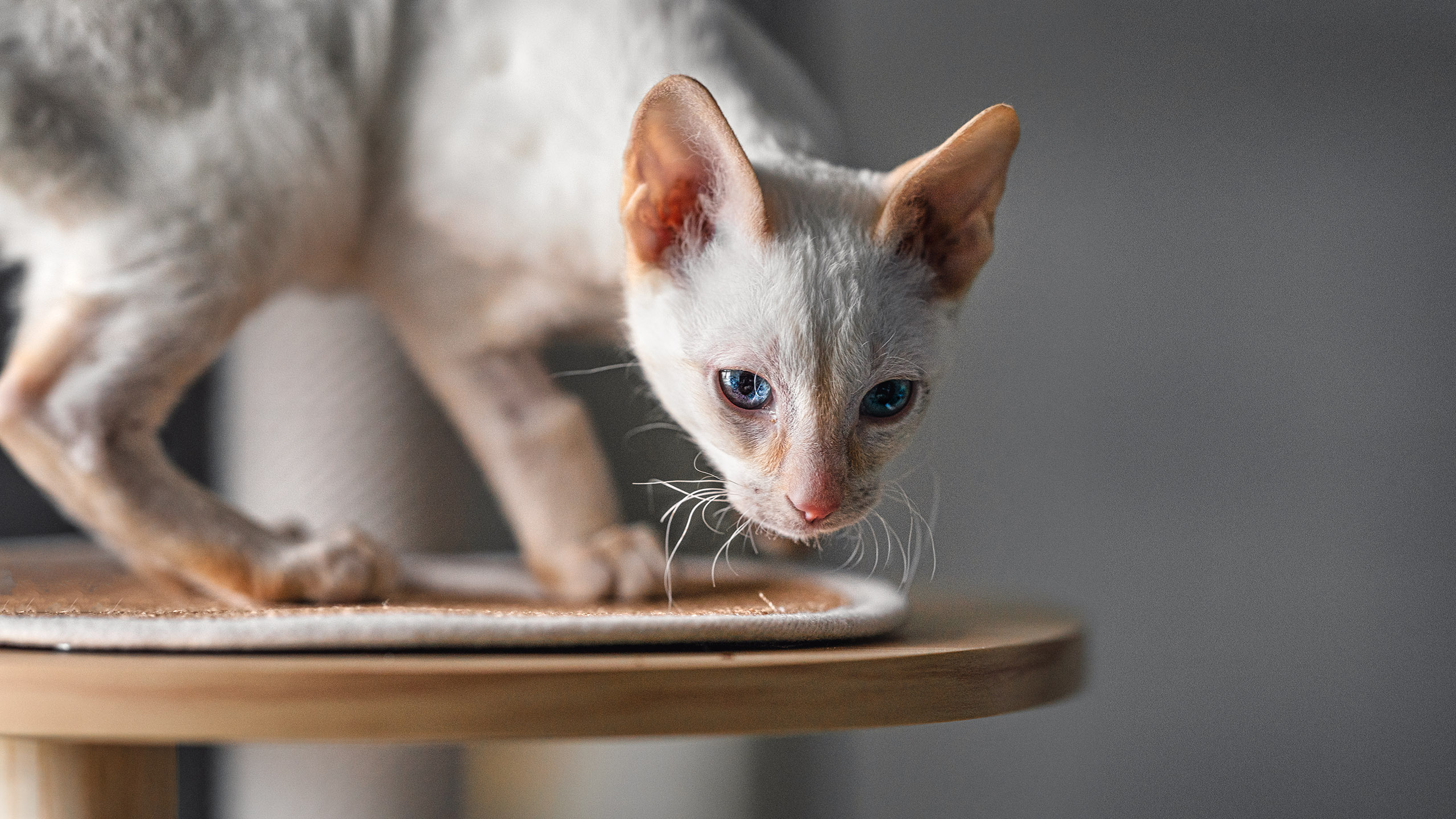 White cat photography