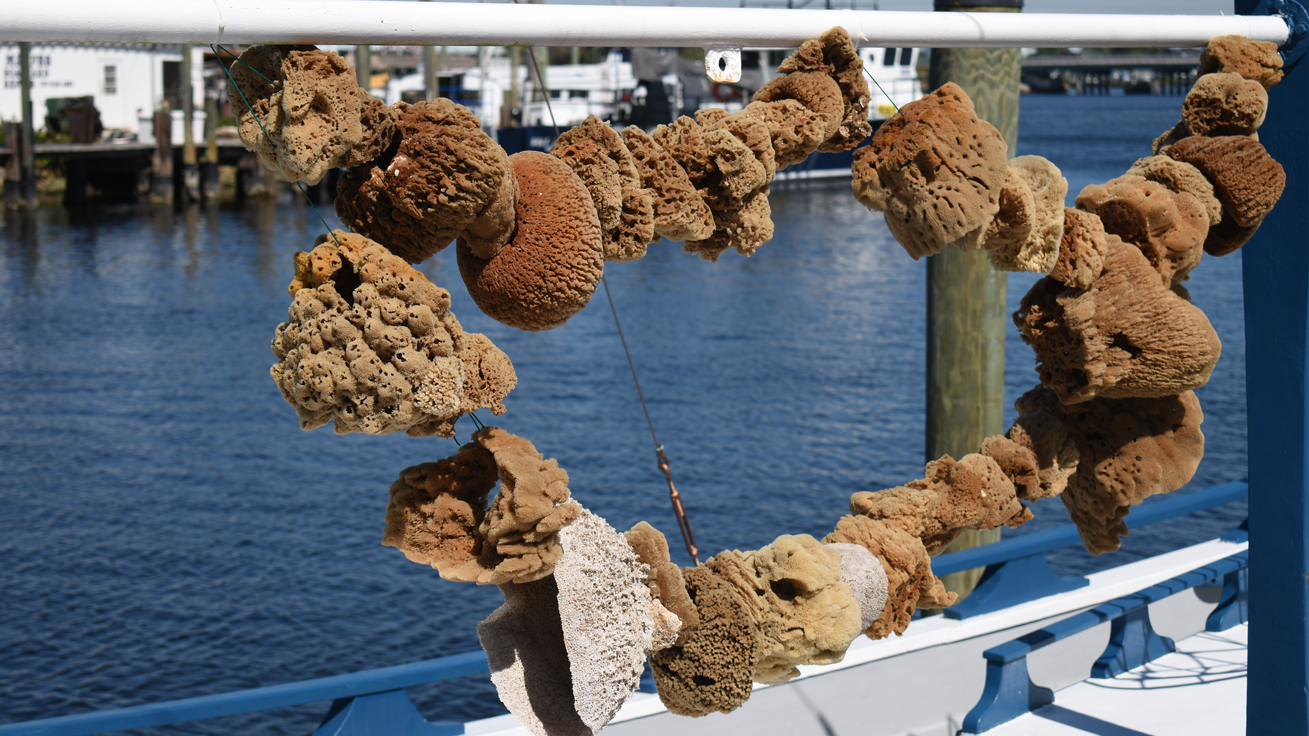 Tarpon Springs Sponges